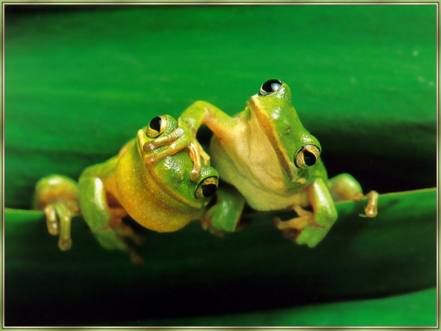 frog153_1356226087_large