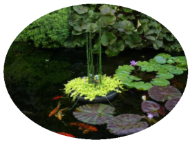 pond fish plants pg 1